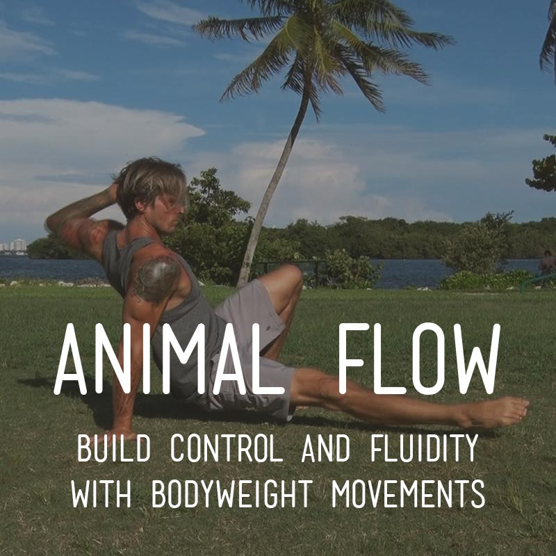 Animal Flow - Build Control and Fluidity with Bodyweight Movements